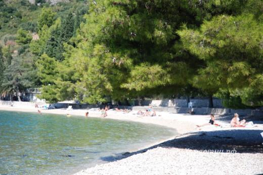 Podaca Vala beach pine